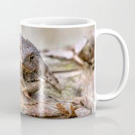 Amphibian, Common British Toad / Frog Coffee Mug
