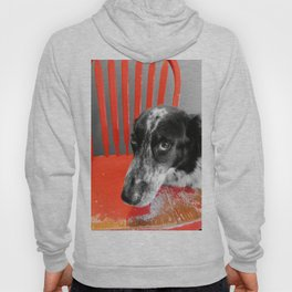 Border Collie in Red Hoody