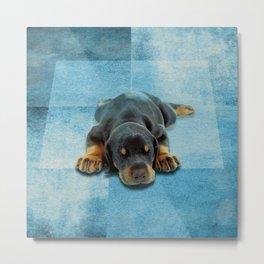 Dobermann Puppy - Doberman Pinscher Metal Print