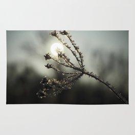 Winter sun Rug