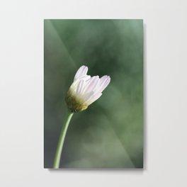 Fragile daisy Metal Print