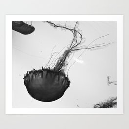 Jellyfish Silhouette  Art Print