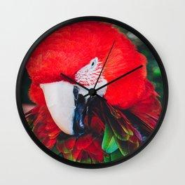 Macaw 2 Wall Clock