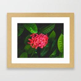 Secret Red Bunch Of Blowers Among Bright Green Leaves Nature Art Framed Art Print