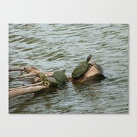 turtles Canvas Prints featuring turtles by Dantastic Photos