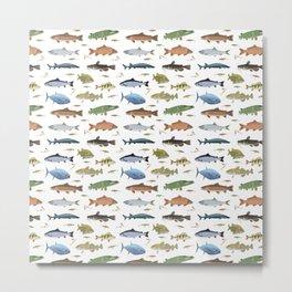 Fish and Baits Metal Print