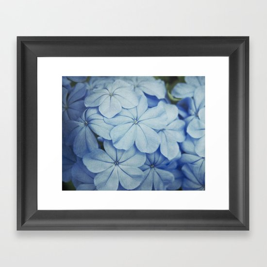 Blue Plumbago Framed Art Print