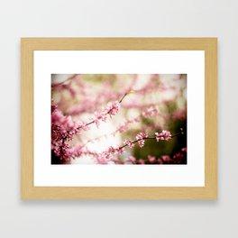 Beautiful Light Framed Art Print
