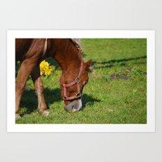 Renaissance Pony - Sorrel Red Art Print