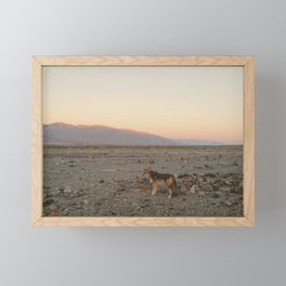 Desert Coyote Framed Mini Art Print