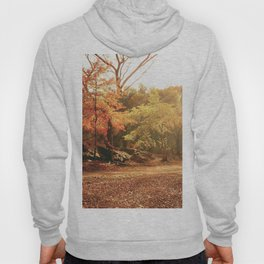 Autumn Sunlight - New York City Hoody