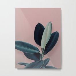 Ficus elastica - berry Metal Print