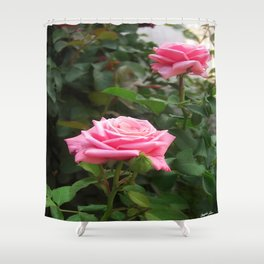Pink Roses in Anzures 5  Shower Curtain