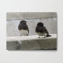 Young Black Phoebes Metal Print