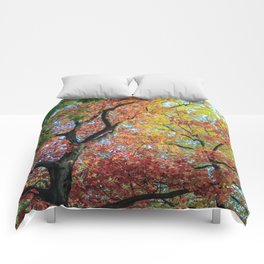 Fall Colors in Warsaw Comforters