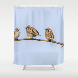Tree Sparrows on branch (Passer montanus) Close Up Shower Curtain