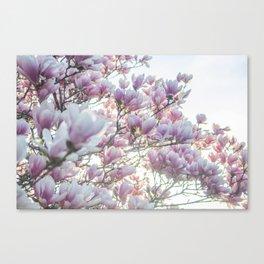 Magnólias rosa florescendo na primavera!! Canvas Print