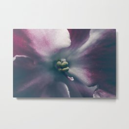 Texture background images African violets Metal Print