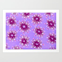 Plum Christie Rose Art Print