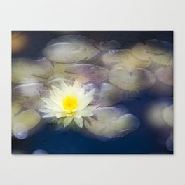 Magic Water Lily 2 Canvas Print
