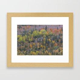 Detail of Peak Fall Colors in Northern Minnesota Framed Art Print