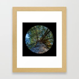 Trees from below 6 Framed Art Print
