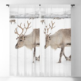Reindeer in The Snow In Wintertime Photo Art Print | North Of Norway Lapland | Travel Photography Blackout Curtain