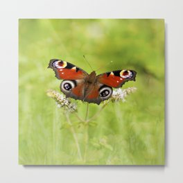The European peacock butterfly Metal Print