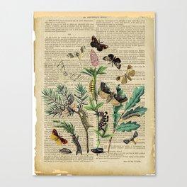 Book Art Caterpillar, Moths & Butterflies Canvas Print