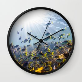Hangin' with the Fishes Wall Clock
