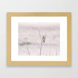 """""""Cassin's Kingbird 2"""" by Murray Bolesta Framed Art Print"""