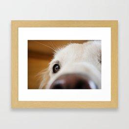 Fluffy Tetriever Close up Framed Art Print