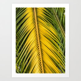 Burned Palm Leaf Art Print