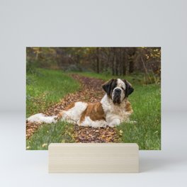 Big cute St Bernard dog in Autumn Mini Art Print