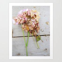 Shabby chic pink geranium Art Print