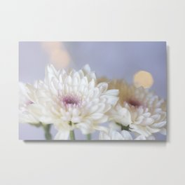 White Chrysanthemum Flowers - Original Botanical Nature Photography - Flora Art  Metal Print