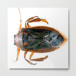 From the Rudy Rocha Home Collection: Waterbug bedbug, Waterbug shower bug Metal Print
