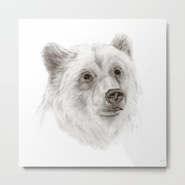 Grizzly :: A North American Brown Bear Metal Print