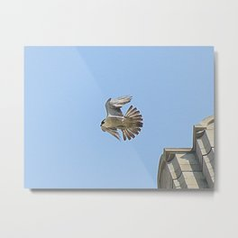Pittsburgh Cathedral of Learning Peregrine falcon 10 Metal Print