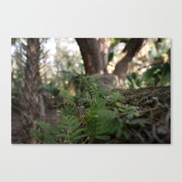 Tree Shrubs Canvas Print