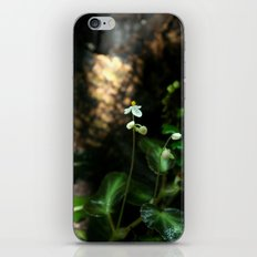 White Flower- Begonia Thelmae iPhone & iPod Skin