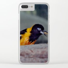 Troupial With Food Clear iPhone Case