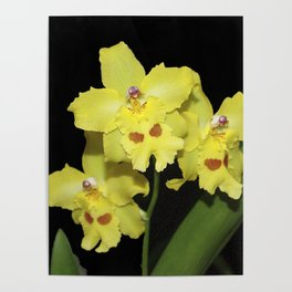 Glorious Golden Orchid - Odontonia Yellow Parade Alpine Poster