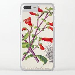 Penstemon Baccharifolius Vintage Botanical Floral Flower Plant Scientific Clear iPhone Case