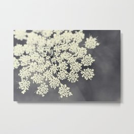 Black and White Queen Annes Lace Metal Print