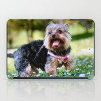 yorkie iPad Cases featuring Darling Yorkie by IowaShots