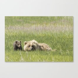 Young Brown Bear Cub and Its Mother, No. 1 Canvas Print