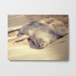 Hawaiin Monk Seal Metal Print