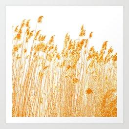 gold ears Art Print