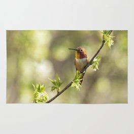 Male Rufous Hummingbird on a Branch Rug